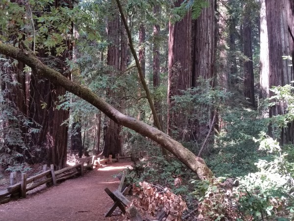 Armstrong Redwoods State Natural Reserve 12