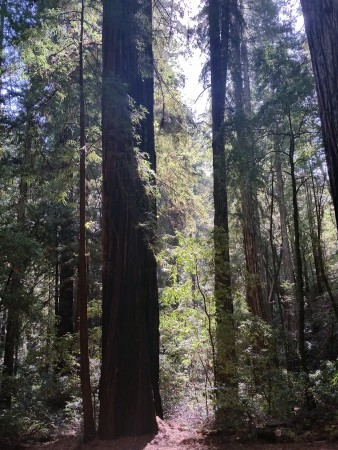 Armstrong Redwoods State Natural Reserve 13