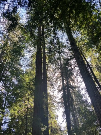 Armstrong Redwoods State Natural Reserve 14