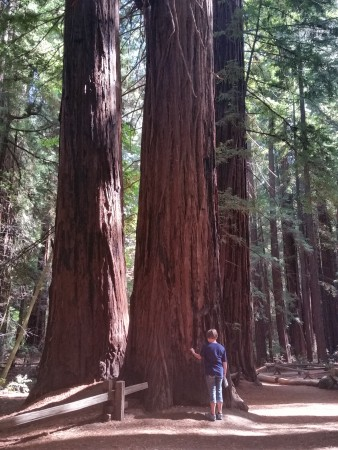 Armstrong Redwoods State Natural Reserve 15