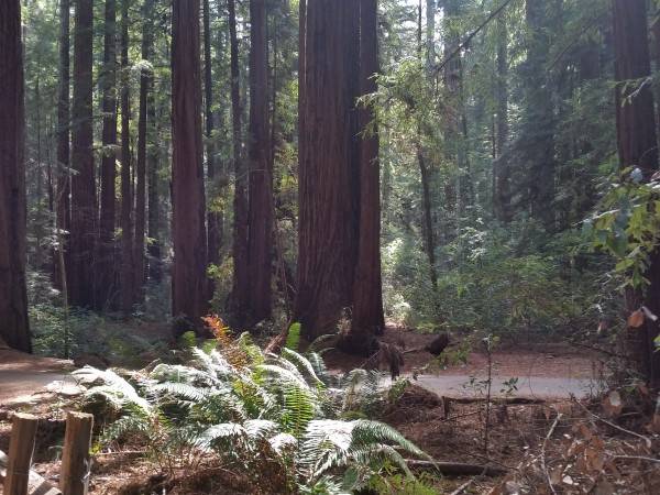 Armstrong Redwoods State Natural Reserve 17