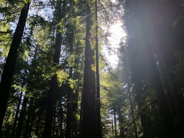 Armstrong Redwoods State Natural Reserve 18