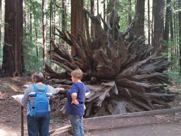 Armstrong Redwoods State Natural Reserve 21