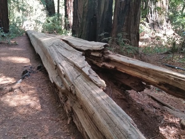 Armstrong Redwoods State Natural Reserve 25