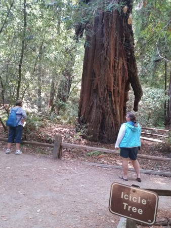 Armstrong Redwoods State Natural Reserve 31