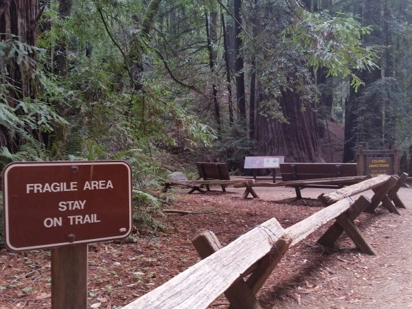 Armstrong Redwoods State Natural Reserve 4