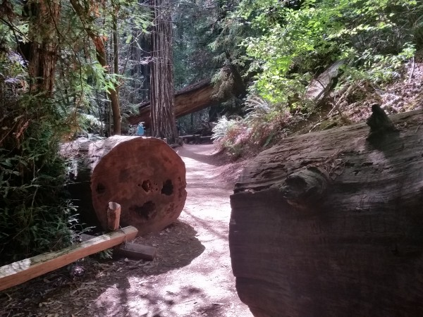 Armstrong Redwoods State Natural Reserve 41
