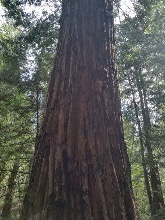 Armstrong Redwoods State Natural Reserve 7