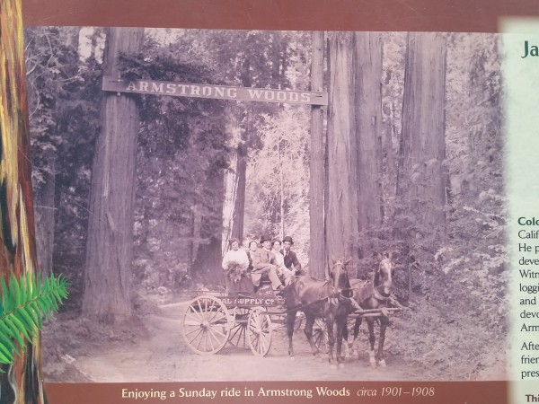 Armstrong Redwoods State Natural Reserve 8