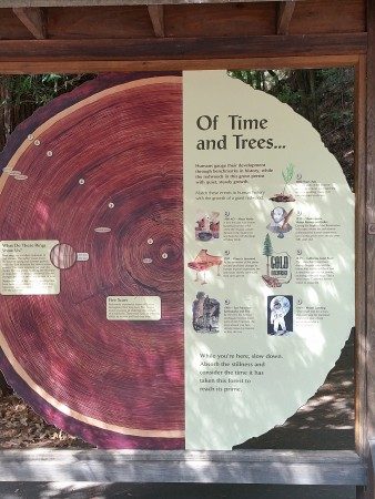 Armstrong Redwoods State Natural Reserve tree info 4