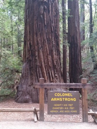 Colonel Armstrong Armstrong Redwoods State Natural Reserve