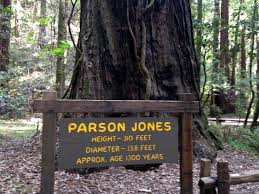 parson jones tree